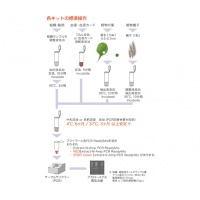 ゲノムDNA抽出/PCRキット EXTRACTION KIT Extract-N-AmpTM/REDExtract-N-AmpTM E3004-12ML